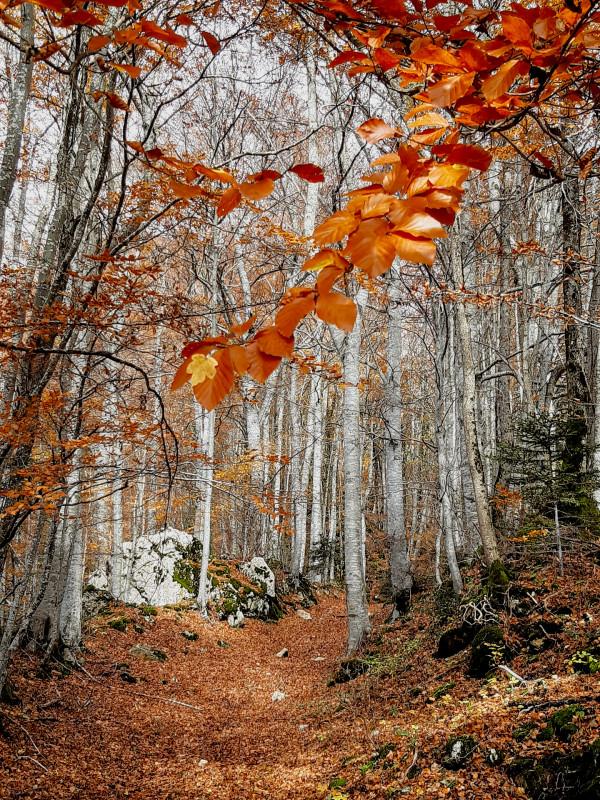 18. Les feuilles d'automne Géraldine Lorin Atelier Photo 360