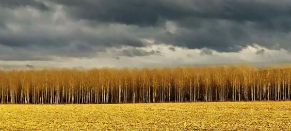 30. orage sur la peupleraie  de Evelyne Giudice  (Objectif Image Lyon)